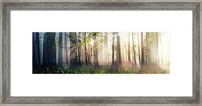 Constancy Framed Print by Cynthia Decker