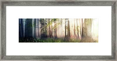 Constancy Framed Print