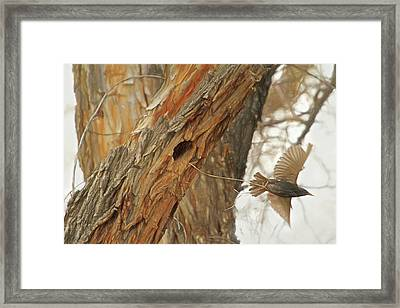 Construction Zone Framed Print by Donna Kennedy