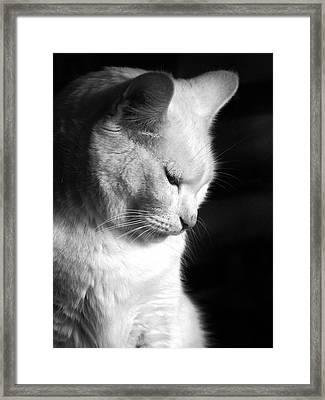 Contempation  Framed Print by Bob Orsillo