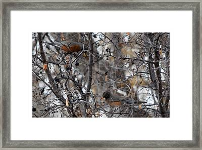 #contemplatethebeautyoftheearth Framed Print by Becky Furgason