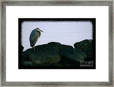 Contemplating Heron Framed Print by Clayton Bruster