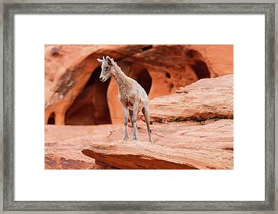 Contemplating  Framed Print by James Marvin Phelps