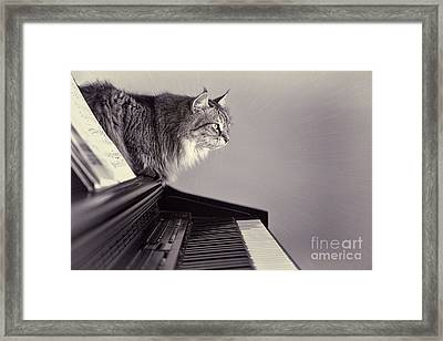 Contemplating Memory Framed Print