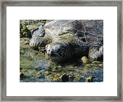 Framed Print featuring the photograph Contemplating by Pamela Walton