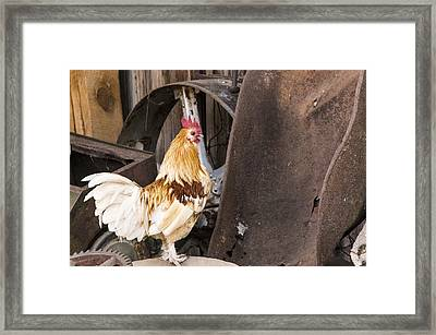 Contemplating Rust Framed Print