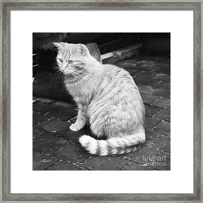 Contemplative Framed Print by Jutta Maria Pusl