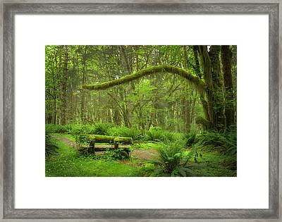Contemplative Rain Forest Framed Print