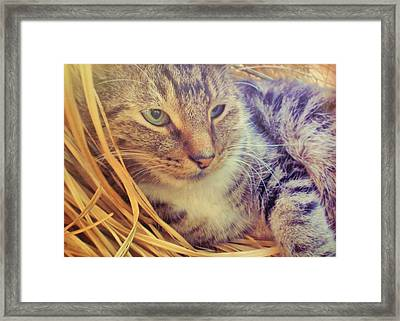Content Framed Print by JAMART Photography