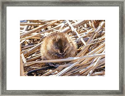 Framed Print featuring the photograph Content Mildred by Steven Santamour