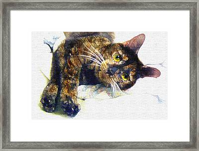 Contented Cat Framed Print by Jane Schnetlage
