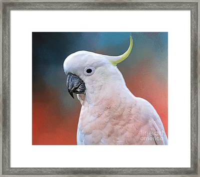 Contented Cocky By Kaye Menner Framed Print by Kaye Menner
