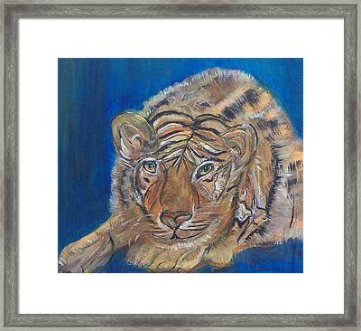 Contented Tiger Framed Print by Mikki Alhart