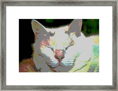 Contentment Framed Print by Dianne Cowen