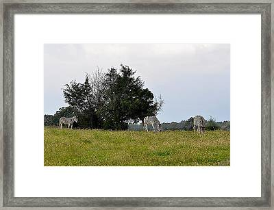 Contentment Framed Print by Jan Amiss Photography