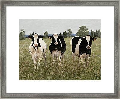 Contentment Framed Print by Mary Ann King