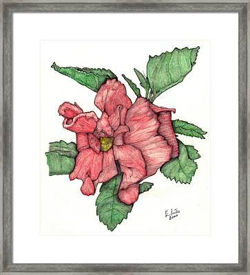 Contour Double Hibiscus Framed Print by Edward Ruth