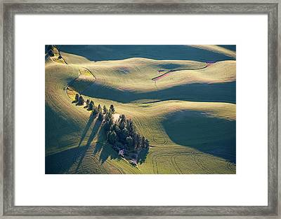 Contours And Trees Framed Print