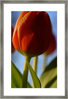 Contrast Framed Print by Corinne Rhode