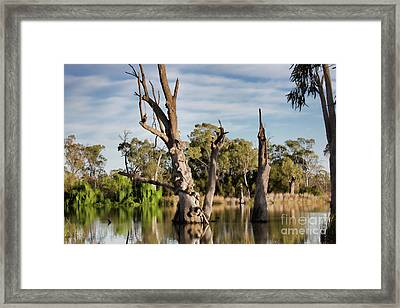 Framed Print featuring the photograph Contrasted by Douglas Barnard