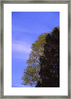 Contrasting Trees Against Sky Framed Print by Randy Muir