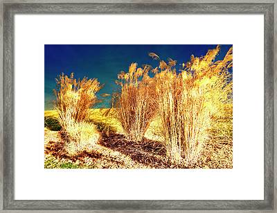 Contrasts Framed Print by Michael Putnam