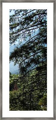 4 Of 4 Controlled Burn Of Yosemite Section Framed Print
