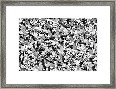Controlled Chaos Bw Framed Print by Everet Regal