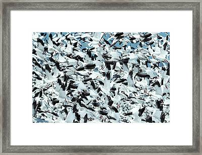 Framed Print featuring the photograph Controlled Chaos by Everet Regal