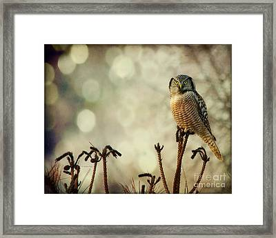 Convenient Perch Framed Print by Heather King