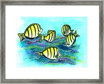 Convict Tang Fish #209 Framed Print by Donald k Hall