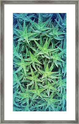 Framed Print featuring the photograph Cool Blue Aloevera  by Aimee L Maher Photography and Art Visit ALMGallerydotcom