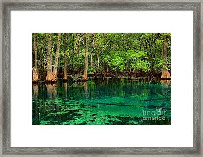 Cool Blue Manatee Spring Waters Framed Print