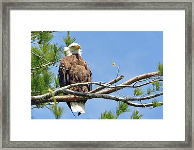 Framed Print featuring the photograph Cool Breeze by Glenn Gordon