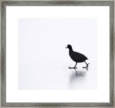 Cool Chick Framed Print by Dapixara Art