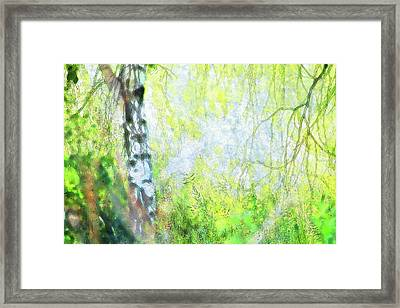Cool Cool In The Shade Of The Birch Framed Print by Ekaterina Torganskaia
