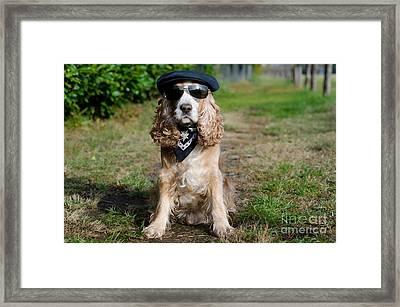 Cool Dog Framed Print by Mats Silvan
