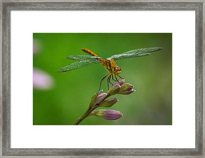 Cool Dude Framed Print by Bill Pevlor