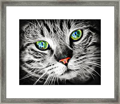 Cool Electric Glow Cat Framed Print by Matthias Hauser