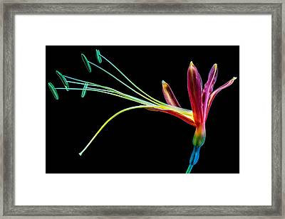 Cool Flower Framed Print by Cco