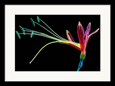 Tem Digital Art Framed Prints