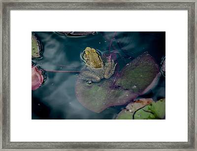 Cool Frog-hot Day Framed Print
