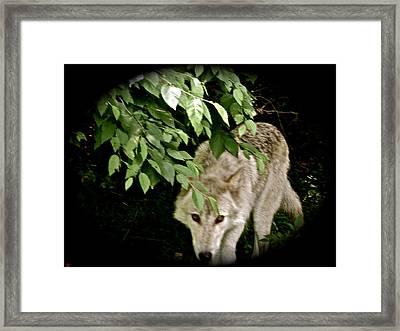Cool Spot Framed Print by Debra     Vatalaro