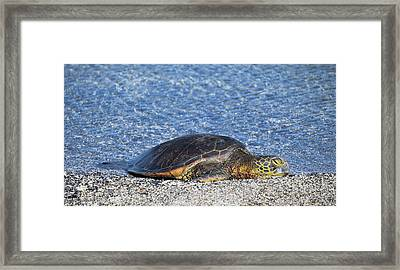 Framed Print featuring the photograph Cooling Off by Pamela Walton