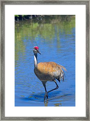 Cooling Off Framed Print by Sharon Talson