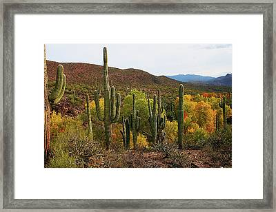 Coon Creek With Saguaros And Cottonwood, Ash, Sycamore Trees With Fall Colors Framed Print by Tom Janca