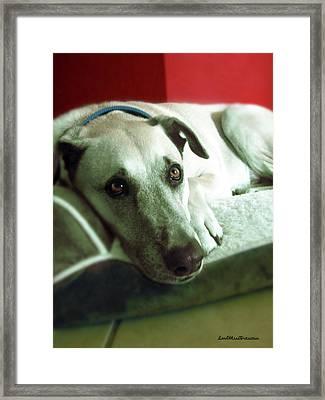 Cooper Goes Cute Artwork Framed Print