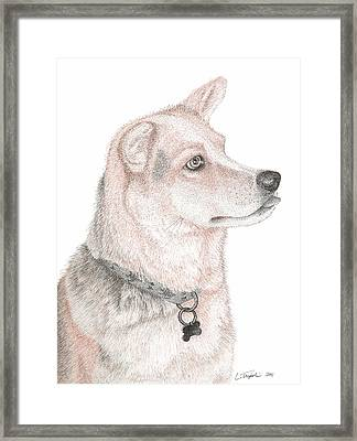 Cooper Framed Print by Lawrence Tripoli