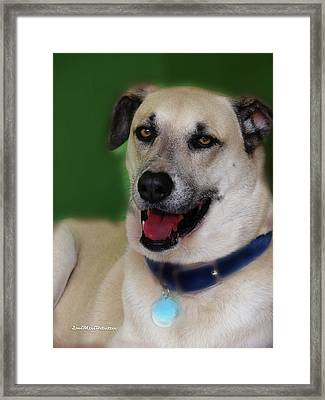 Cooper Portrait Framed Print