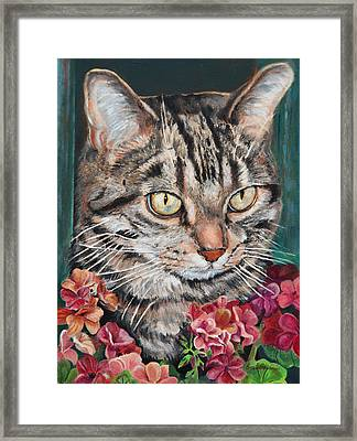 Cooper The Cat Framed Print
